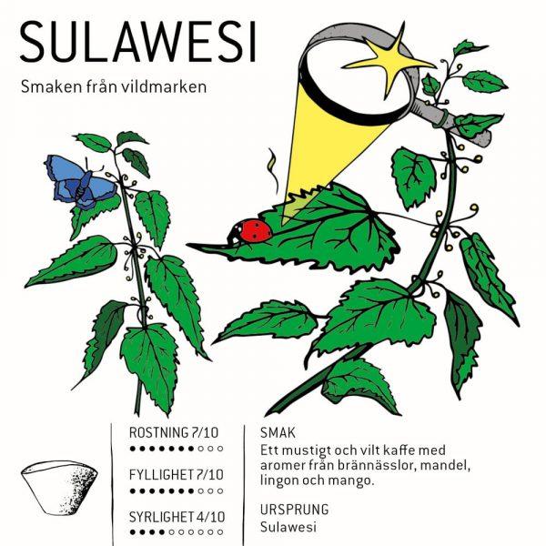 Sulawesi - kaffe